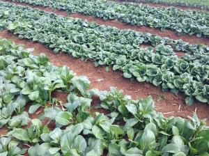 The Fresh Grower 1 (4)