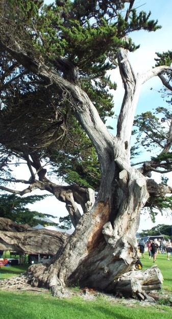 Clarks bch tree tri day Mar 2016
